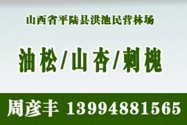 山西省平陆县洪池民营林场