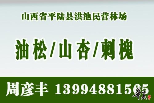 周彦丰山杏网站