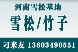 河南雪松基地(自产自销)