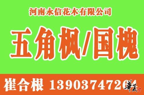 崔合根五角枫网站