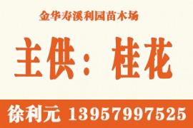 金华寿溪利园苗木场