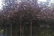 苗圃基地苗木展示
