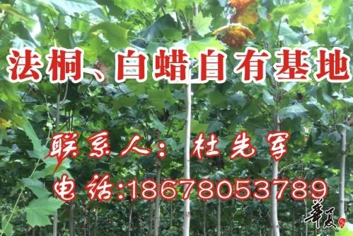 杜先军网站