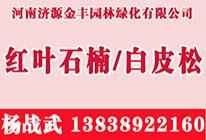 河南济源金丰园林绿化有限公司
