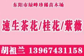 浙江省东阳市绿峰珍稀苗木场