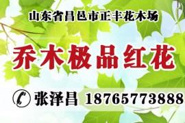 山东省昌邑市正丰花木场