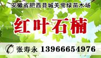 安徽省肥西县城关常绿苗木场