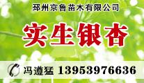邳州京鲁苗木有限公司
