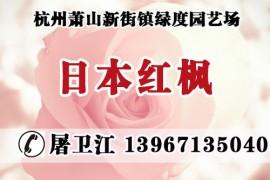 杭州萧山新街镇绿度园艺场