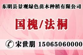 东明县景观绿色苗木种植有限公司