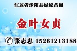 江苏省沭阳县绿缘苗圃