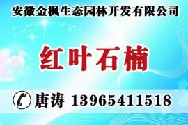 安徽金枫生态园林开发有限公司