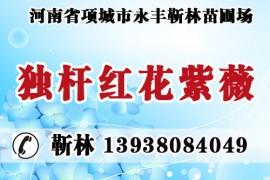 河南省项城市永丰靳林苗圃场