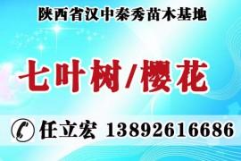 陕西省汉中秦秀苗木基地