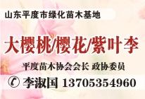 山东菏泽鲁彩苗木有限公司