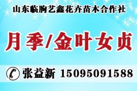 山东临朐艺鑫花卉苗木合作社