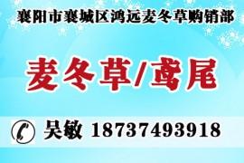 襄阳市襄城区鸿远麦冬草购销部