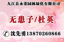 九江县永荣园林绿化有限公司