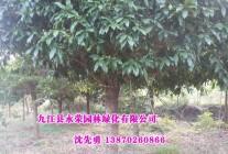 精品苗木供应