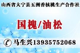 山西省大宁县五洲香核桃生产合作社