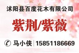 沭阳县百度花木有限公司