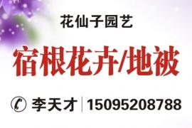 山东省青州市黄楼镇新花卉市场花仙子园艺