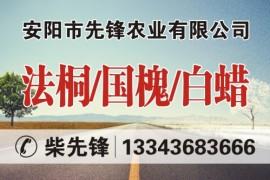 安阳市先锋农业有限公司