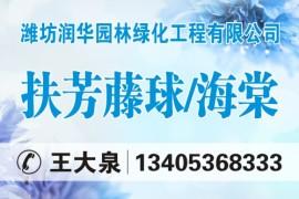 潍坊润华园林绿化工程有限公司