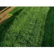 草坪大量供应,草坪销售、养护