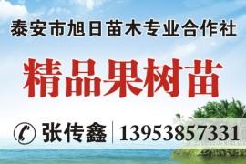 泰安市旭日苗木专业合作社