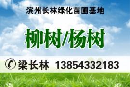 山东滨州长林绿化苗圃基地