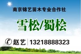 南京锦艺苗木专业合作社