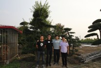 2017.9.22华夏园林考察山东青岛邵林苗圃 (63)