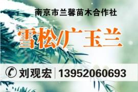 南京市兰馨苗木合作社