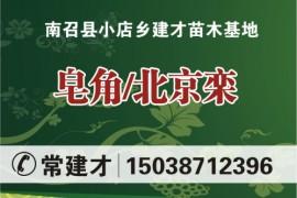 南召县小店乡建才苗木基地