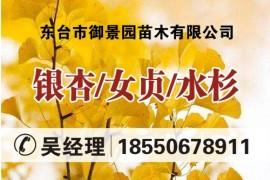 东台市御景园苗木有限公司