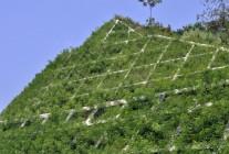 绿化工程案例