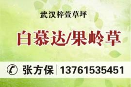 武汉梓萱草坪