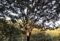 浙江省长兴县泗安镇卫华农林开发有限公司