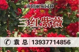 南阳市丽苑园林绿化工程有限公司