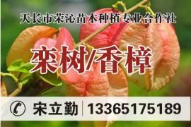 天长市荣沁苗木种植专业合作社