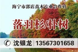 浙江省海宁市郭店苗木专业合作社