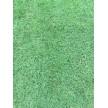 绿化草坪 基地批发直销 百慕大草坪 马尼拉草坪 草皮