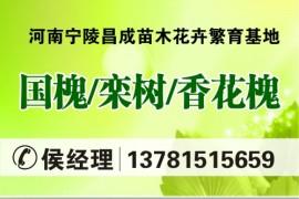 河南省宁陵县昌成苗木花卉繁育基地
