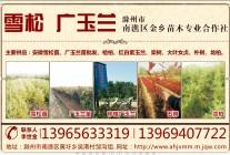 滁州市南谯区金乡苗木专业合作社
