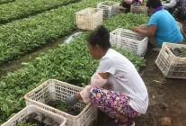 天津旭东苗木种植专业合作社