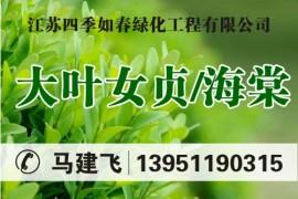 江苏四季如春绿化工程有限公司