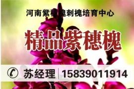 河南省紫穗槐刺槐培育中心