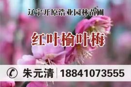 辽宁开原浩业园林苗圃