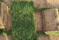 湖北中绿恒草业生态发展有限公司